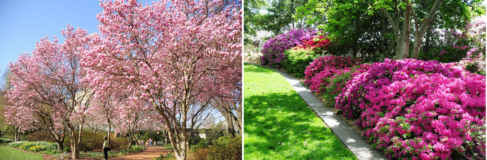 Five Gorgeous Spring Plants Wrightsville Beach Landscapes